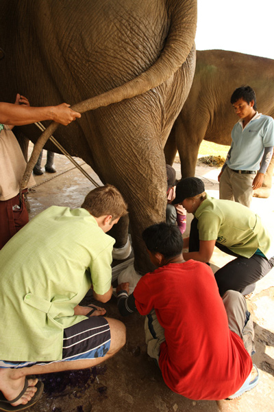 Elephant Nature Park - Student Vet Volunteer