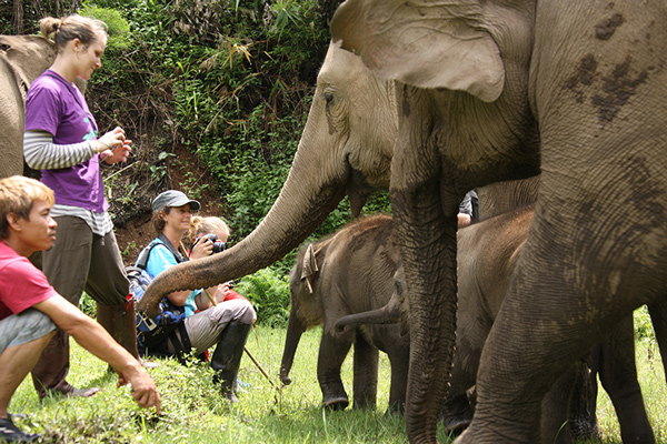 Elephant Nature Park - School, College & Group Visits
