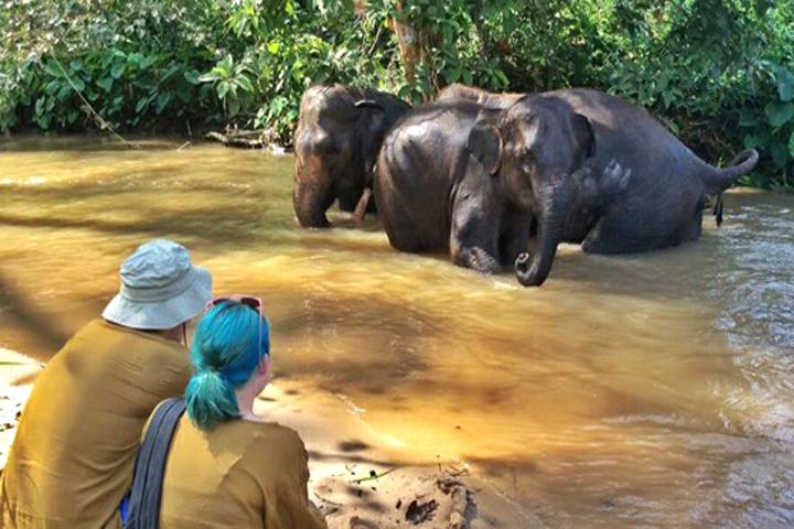 Hope for Elephants