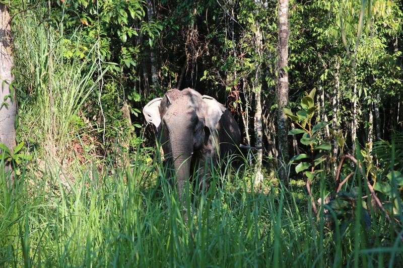 Cambodia Elephant Sanctuary