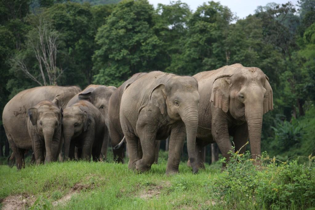elephant nature park 3 1024x682