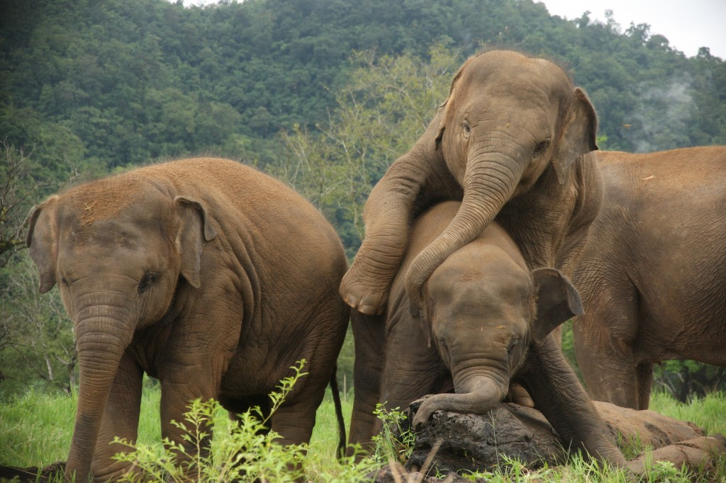 elephant nature park 1 1024x682