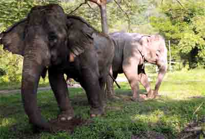 Pamper a Pachyderm - Full day visit