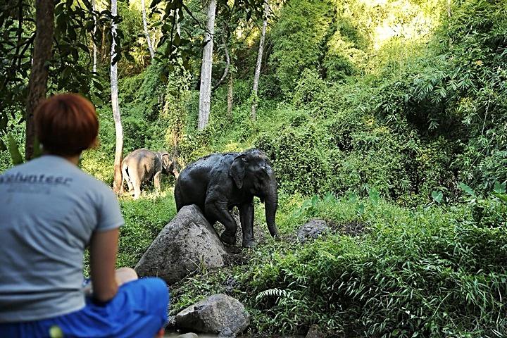 Sunshine for Elephants