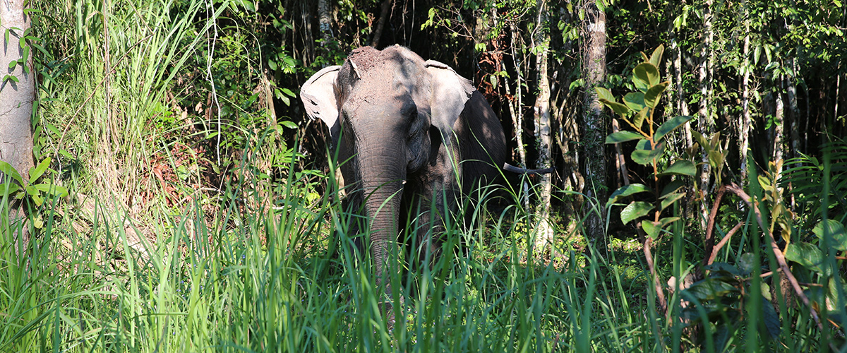 Elephant Sanctuary Cambodia - Weekly Volunteer