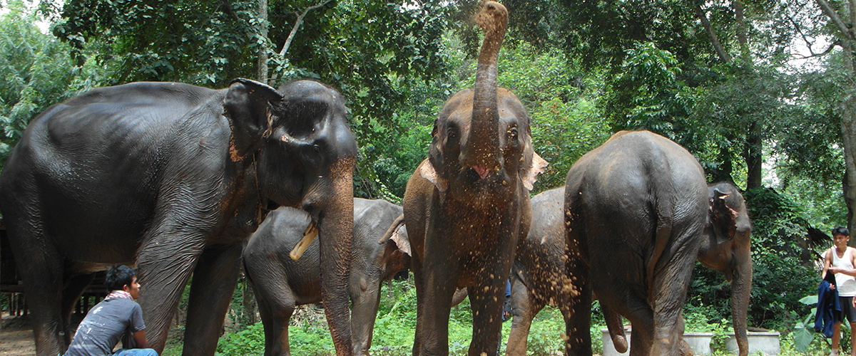 Erawan Elephant Retirement Park - Weekly Volunteer