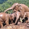 To see the elephants happiness also bring our mahout cheerfulness