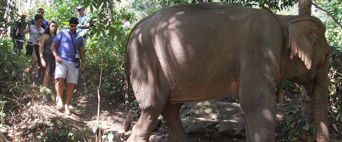 Sunshine for Elephants - Single Day Visit