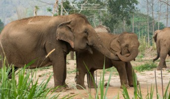 Pookie fall in love with our baby elephant Khundej