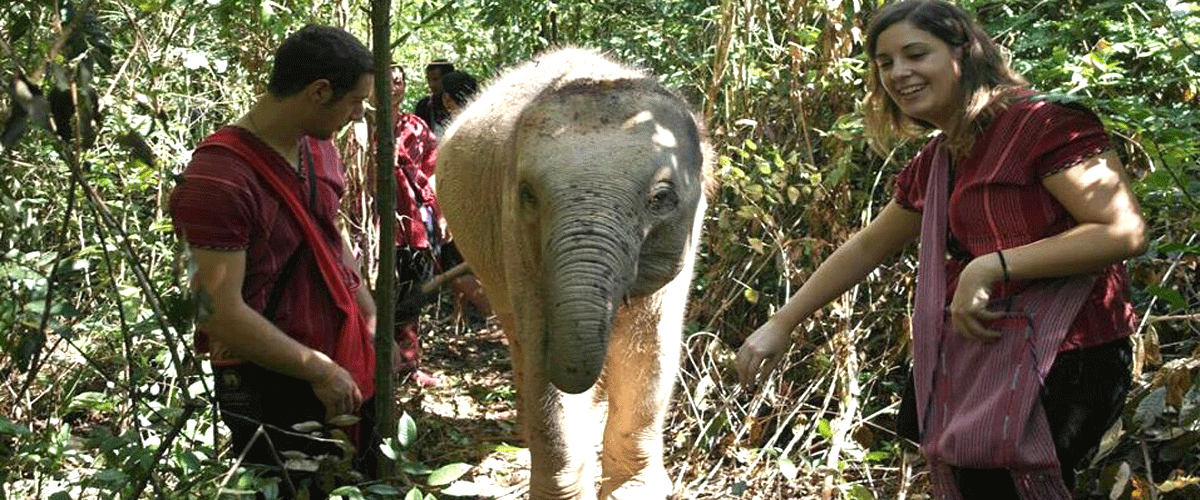 Karen Elephant Experience - Single Day Visit