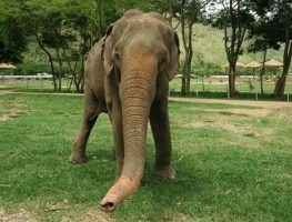 Elephant Of The Week: Jaidee, the generous old lady
