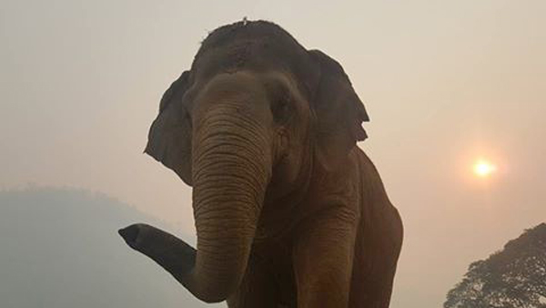 Elephant Of The Week : Jokia