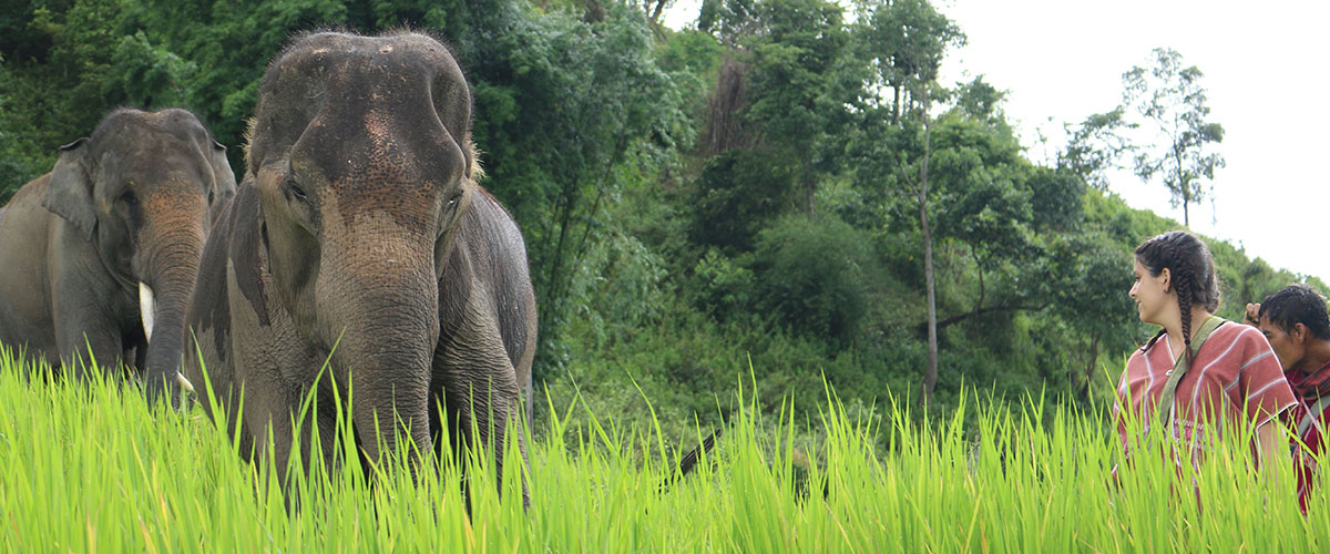 Karen Elephant Home