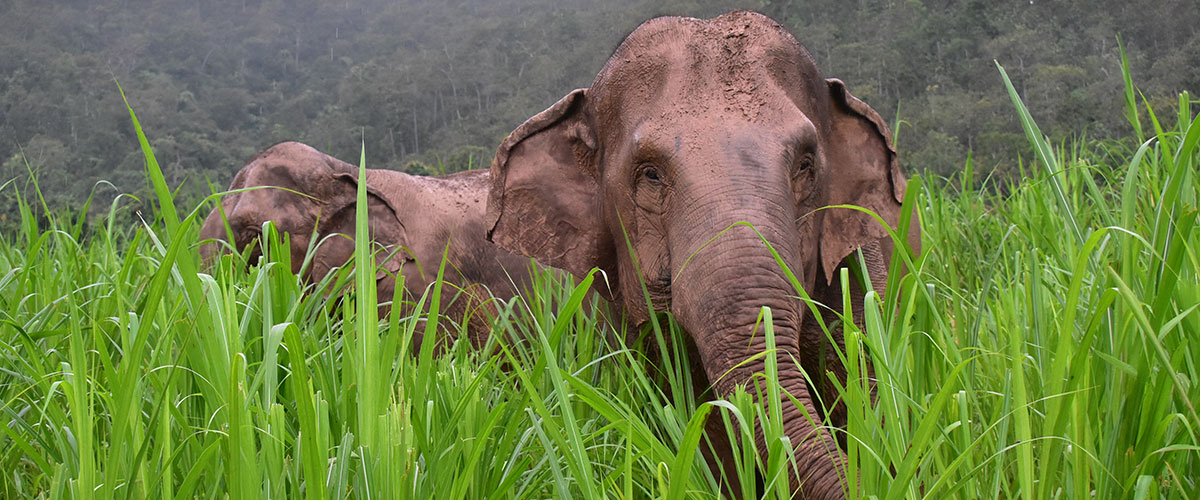 Karen Elephant Serenity
