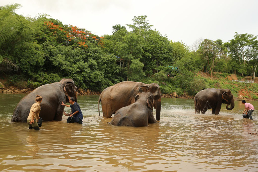 Elephant Haven Single Day