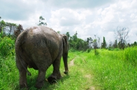 Cambodia - Elephant Sanctuary Cambodia - Weekly Volunteer