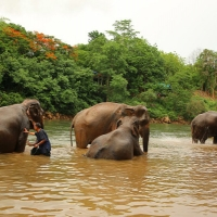 Elephant Haven Single Day - Sai Yok Kanchanaburi