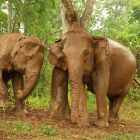 Elephant Haven Overnight - Sai Yok Kanchanburi