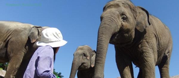 3 wise lady elephants
