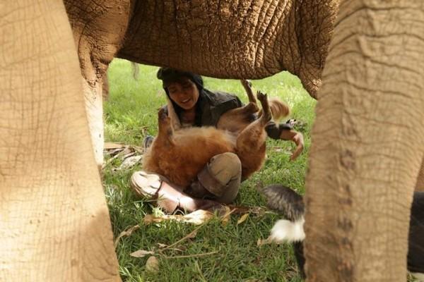 Stumpy enjoys playing with Lek and elephant