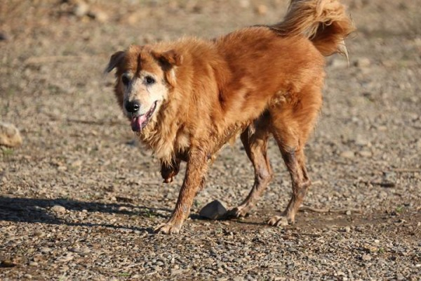 A rescued dog from the flood and he loss one front leg by train