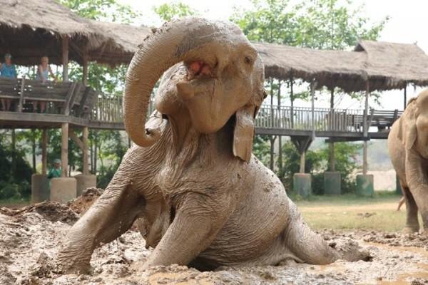 Mud and elephants