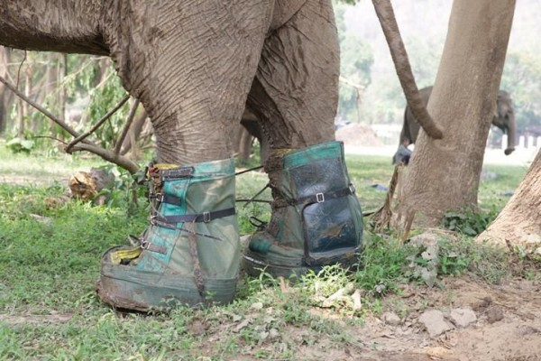 New boots for Mae Tee and protect her feet from the dirty mud.