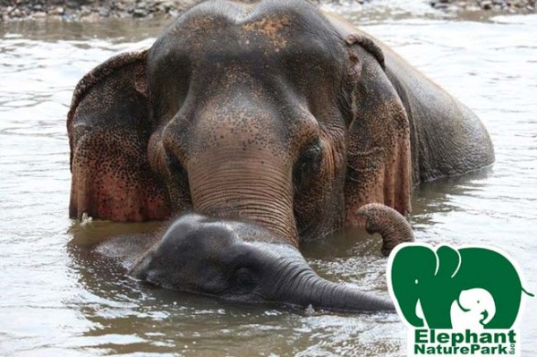 She not choose to love one baby but she love all baby elephant