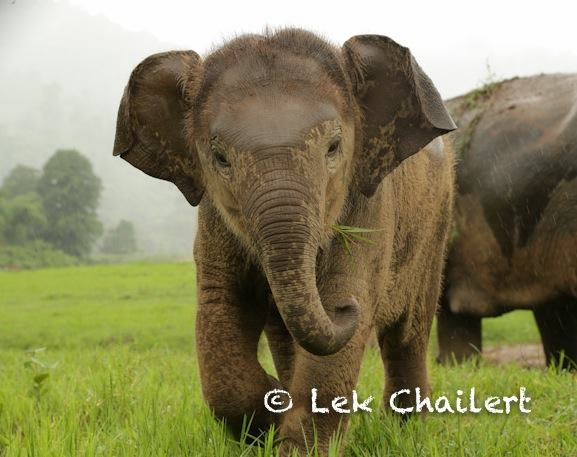Dok Mai and her freedom at the park