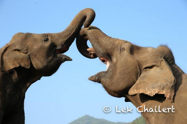 Trunk up,greeting each other with the smile