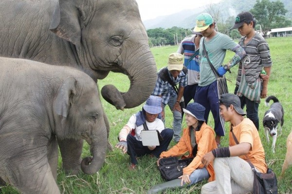 Our cute elephant love to join watching video