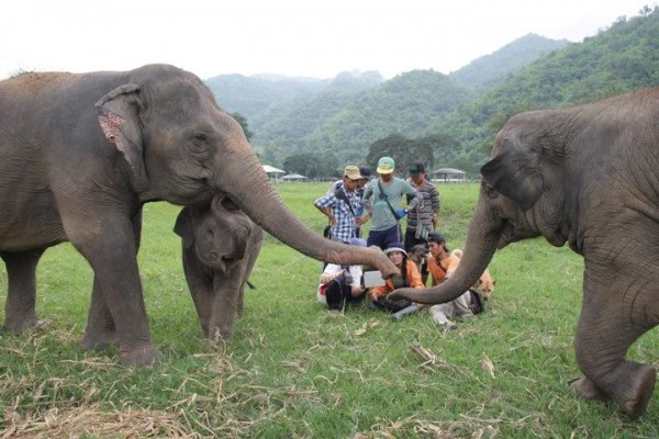 They love to learn the new things about elephant