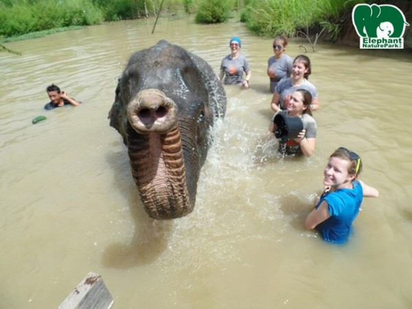 Great shot, volunteers take a bath with elephant.