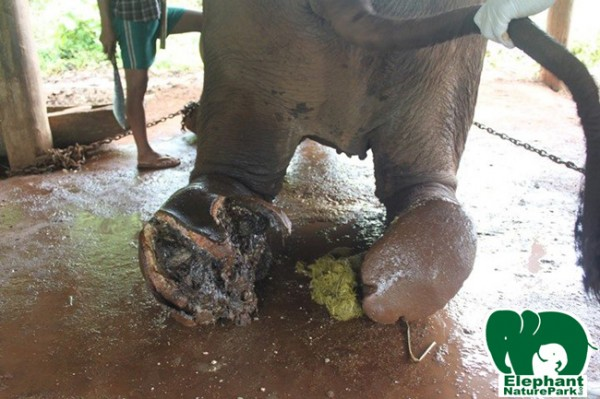 What a terrible injury,poor elephant