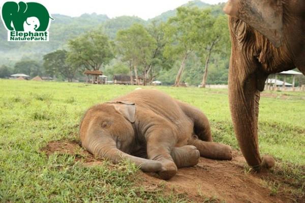 Navann sleep while Nanny Kham Pan keep an eyes on him