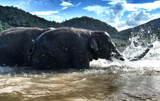 Faamai_bathing_03_n