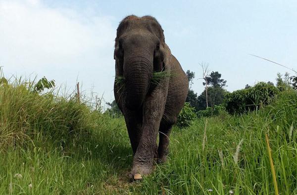 Cambodia4_n