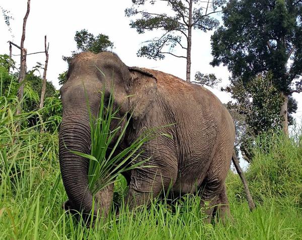 Cambodia5_n