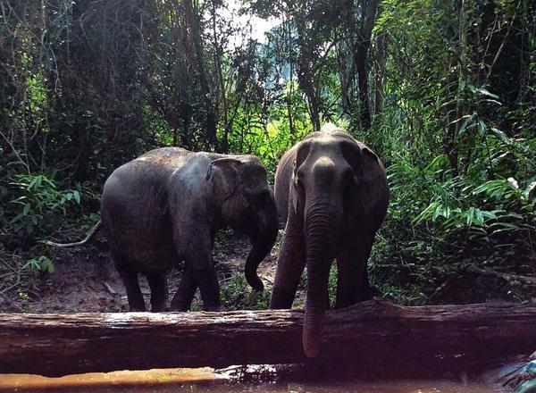 Cambodia6_n