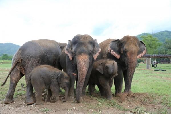 nanny elephant
