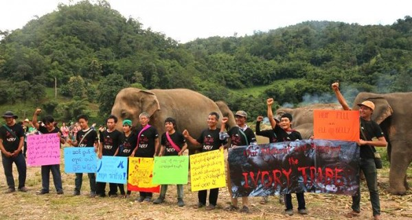 support for elephants, by elephants
