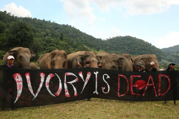 Please do not buy any ivory products - they mean death and misery to beautiful elephants