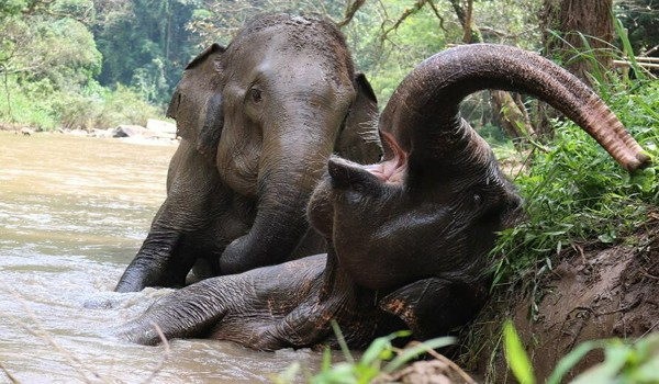 Elephants are living with blissfulness when they are free from work and abuse.