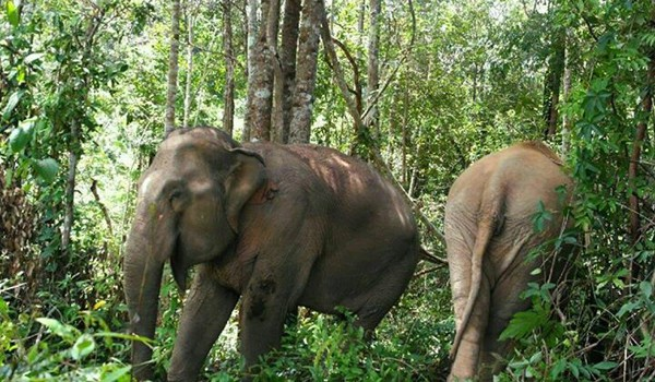 Our elephants are very happy to be roam free in the forest