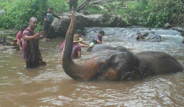 Spend a good time with the elephant in the river