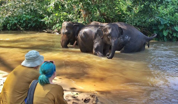 Watching elephants enjoy their lives of freedom at Hope for Elephants program