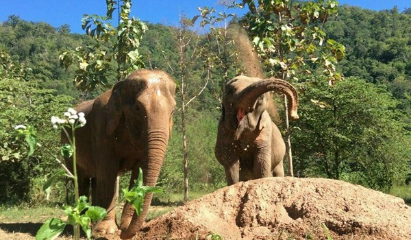 Living with freedom at Pamper a Pachyderm bring the happiness to the elephant lives