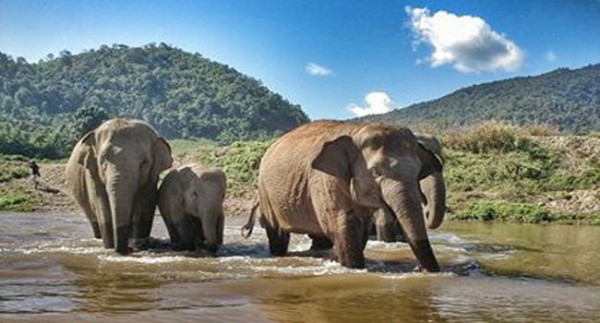 Faamai and family walk across the river to the platform for their food.