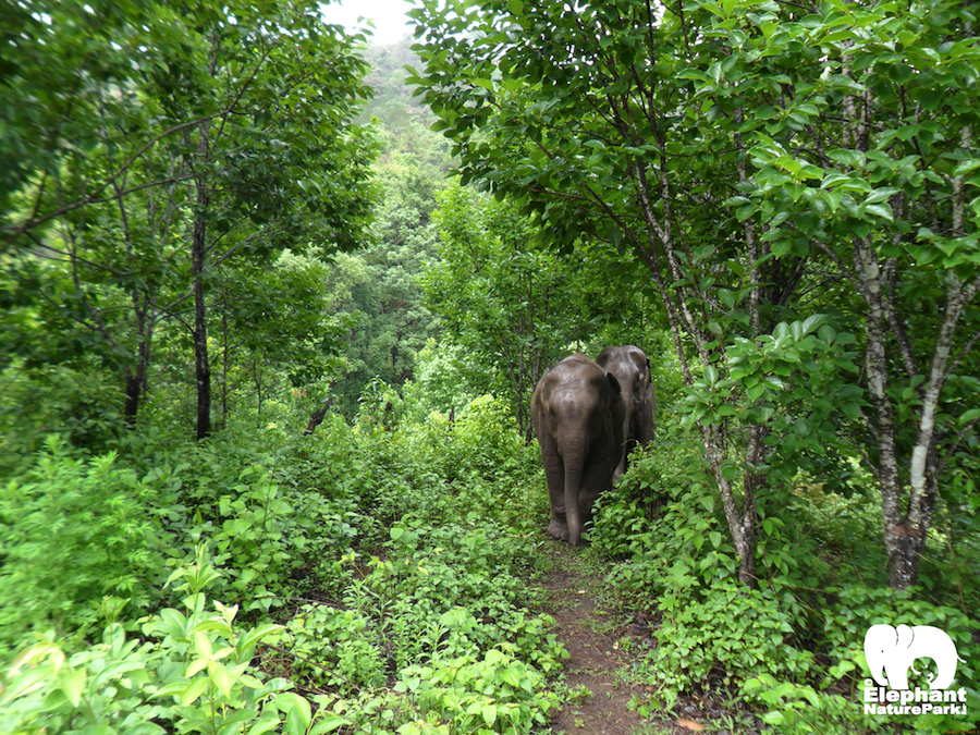 Journey To Freedom – Living With Elephants