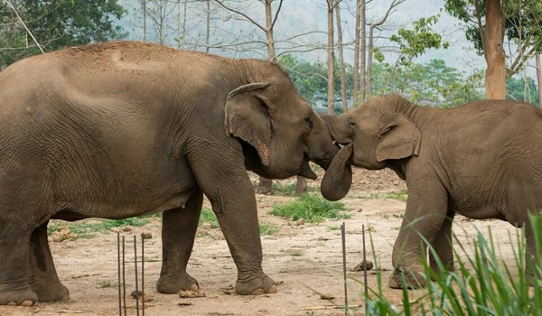 Pookie give a trunk hug to Khundej at Elephant Nature Park.